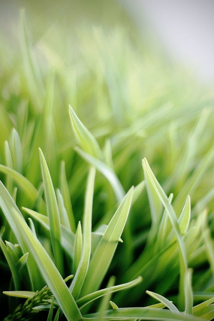How Can You Remove Winter Grass From Lawn?